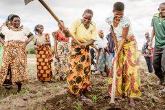 Progressing National Implementation 2017 thumbnail